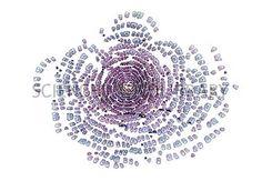 Water milfoil shoot-tip, light micrograph