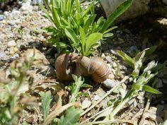 Sandarium – Magerbeet – ausführliche Baudokumentation – Hortus Girasole Snail, Animals, Delphinium, Peonies, Animales, Animaux, Animal, Animais, Slug