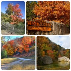 Lost Maples State Natural Area Is The Best Location In Central Texas To See Fall Foliage It S A Three Hour Drive From Austin But Well Worth Trip