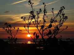 ANOTHER FABULOUS SUNSET ON OUR BEACH #4