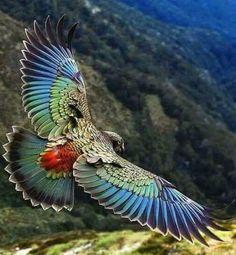 Pretty Birds, Beautiful Birds, Animals Beautiful, Beautiful Butterflies, Beautiful Pictures, Animals Amazing, Beautiful Gorgeous, Amazing Photos, Simply Beautiful