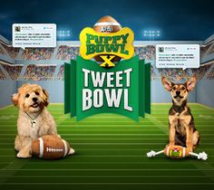 Puppy Bowl: Animal Planet ON SUPERBOWL SUNDAY WILL BE AIRED BACK TO BACK SO YOU DON'T MISS IT!
