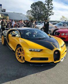 Luxury Sports Cars, New Sports Cars, Exotic Sports Cars, Best Luxury Cars, Super Sport Cars, Exotic Cars, Ferrari, Bugatti Cars, Lamborghini Cars
