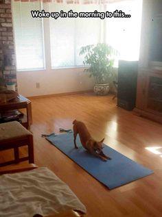 Don't Disturb Yoga Dog
