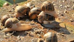 Touchstone Snails thanks to its experience & high quality academic knowledge, provides comprehensive services to anyone wishing to invest in snail farming. Snail Farming, Snails, Business, Snail, Store, Business Illustration