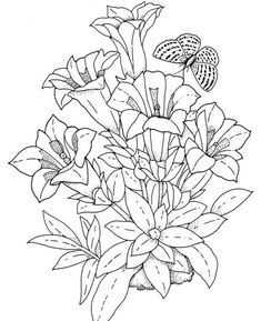 Realistic Flower Coloring Pages Flowers Colouring