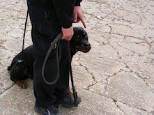 Obedience training. Training Day, Dogs, Animals, Animales, Animaux, Pet Dogs, Doggies, Animal, Animais