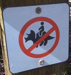 No Triceratops Rides? Dang it!