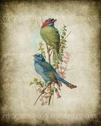 vintage birds illustration - Cerca con Google