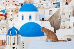 Greek cats stroll in the white roof, watching blue sea.