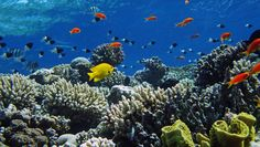Pictures of Coral Reefs