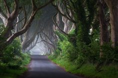 Photo Dark Hedges Northern Ireland by Przemysław Zdrojewski on Great Pictures, Cool Photos, Landscape Photography, Nature Photography, Natural Phenomena, Places Of Interest, Beautiful Places To Visit, Amazing Places, Beautiful Things