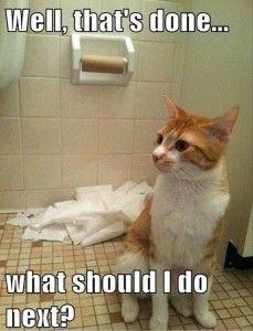 Don't let your cat into the bathroom! | Jon-E-VAC | (888) 942-3935 | www.jonevac.com