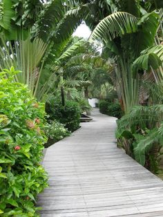 Ile St. Barth-Path to Garden Rooms