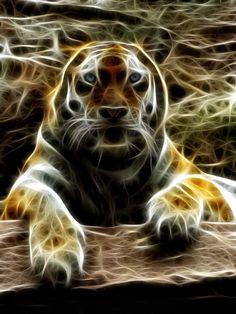 I tried again a fractal, but somehow I do not really like it. Stock from ~animalphotos --> [link] Siberian Fractal Tier Wallpaper, Animal Wallpaper, Big Cats Art, Cat Art, Neon, Flame Art, Beautiful Cats, Beautiful Body, Animals Beautiful