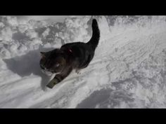A moment of Zen with Maru in the snow -Snow and Maru 2.- - YouTube