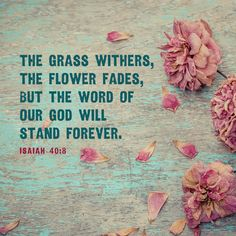 The grass withers, the flower fades, but the word of our God will stand forever. – Isaiah 40:8
