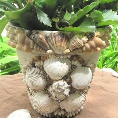 shell encrusted pot