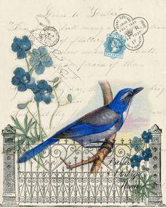 Botanical Print Blue Bird – BELLAVINTAGEHOME