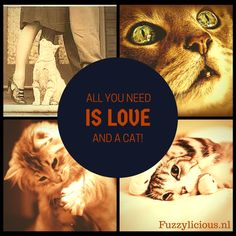 All you need is love... And a cat!