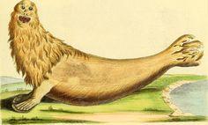 Sea lion from Die Saugthiere in Abbildungen Nach der Natur, 1774.