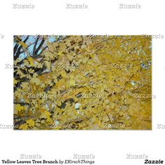 Yellow Leaves Tree Branch Poster