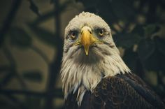 'That Look' ~ St. Louis Zoo
