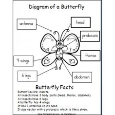 butterfly diagram diagram butterfly and students rh pinterest com Maunder Butterfly Diagram Diagram of a Butterfly Worksheet
