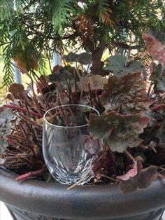Broken wine glass = new rain gauge Rain Gauge, Gauges, Reuse, Terrarium, Wine Glass, Recycling, Plants, Decor, Terrariums