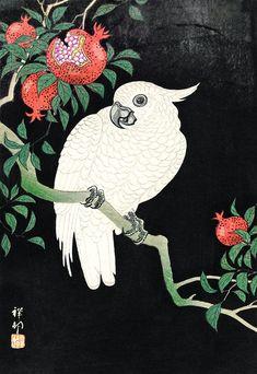 Art And Illustration, Free Illustrations, Japanese Prints, Japanese Art, Vintage Japanese, Zoo 2, Ohara Koson, Japanese Painting, Cockatoo
