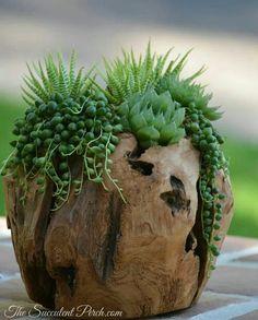 succulents...in a rustic earthy pot
