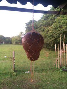 Porongo em Rede - Gourd net