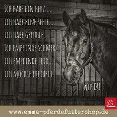 Die 106 Besten Bilder Von Spruche Pferd Horse Quotes Equestrian