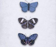 Imagem de butterfly, blue, and vintage