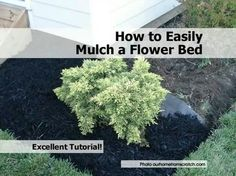 How to mulch a flower bed