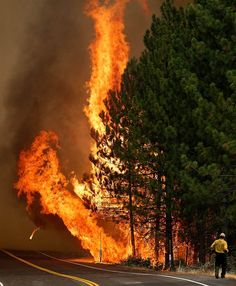 The Rim Fire burns along Highway 120 near Yosemite National Park, Calif., on Aug. 25. With winds gusting and flames jumping from treetop to treetop, hundreds of firefighters have been deployed to protect communities in the path of the Rim Fire raging north of Yosemite National Park.