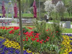 """""""FRÜHLING im EMMERAUEN PARK LÜGDE"""" Blühend, brennend, bunt ist das Motto! Bummeln, Wandern, schlendern und genießen....   """"Lippe entdecken"""" buchen oder """"Mythenwegwandern"""". www.HotelSonnenhof.com Motto, Bunt, Arch, Outdoor Structures, Plants, Environment, Hiking, Flora, Mottos"""