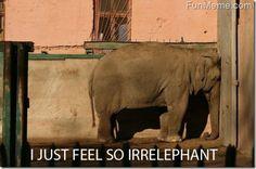I love animal puns