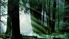 FF6 Orchestral Remix: The Mystical Phantom Forest Final Fantasy, Mystic, Waterfall, Amazing, Outdoor, Outdoors, Waterfalls, Outdoor Games, Rain