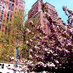 Springtime in New York - Travel Habit
