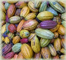 ripe cacao pods  ~K~ personal favorite for obvious reasons