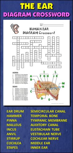 Heart crossword with diagram editable student learning diagram ear crossword with diagram editable ccuart Choice Image