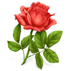 A Single Red Rose, Romantic Floral, Valentine's Day Sweetheart Gift, Symbol of Love and Romance Counted Cross Stitch Pattern Rose Images, Rose Pictures, Flower Images, Decoupage, Comment Planter Des Roses, Rose Flower Png, Single Red Rose, Rose Icon, Planting Roses