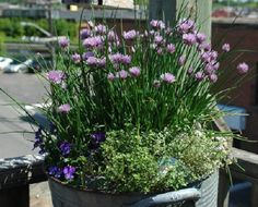 Try these Container Herb Garden Combinations to grow the essential cooking herbs fresh in one pot to increase the flavor of your food. Container Herb Garden, Container Gardening Vegetables, Container Plants, Vegetable Gardening, Garden Web, Easy Garden, Garden Ideas, Garden Design, Fall Vegetables To Plant