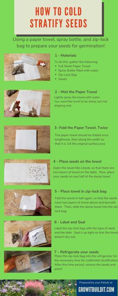 How to Stratify Seeds, An Illustrated Guide – GrowIt BuildIT