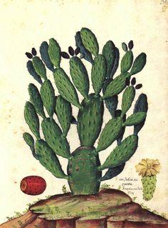 Da 'Natura Picta' di Ulisse Aldrovandi (1522-1605)