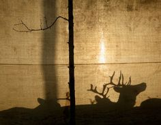 photographie erika larsen sami walking with reindeer
