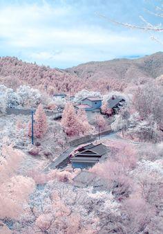 Sakura Yoshino Yama, Japan