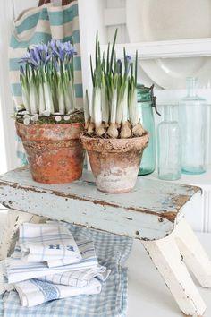 Spring crocuses in terracotta pots Garden Bulbs, Garden Pots, Garden Shop, Terra Cotta, Vibeke Design, Spring Bulbs, Silk Flower Arrangements, Spring Sign, Terracotta Pots