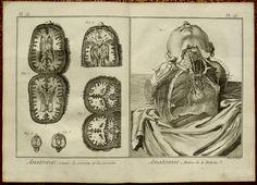"""1779. [Encyclopédie ou Dictionnaire raisonné des sciences, des arts et des métiers.] de Denis Diderot et Jean le Rond d'Alembert. Anatomie Pl. 15. """"Cavites du Cerveau et du Cervelet"""". Anatomie Pl 16. """"Arteres de la Poitrine""""."""